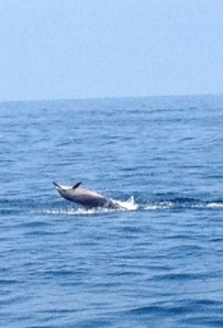 Perfect way to end my Kona trip - swimming with the dolphins
